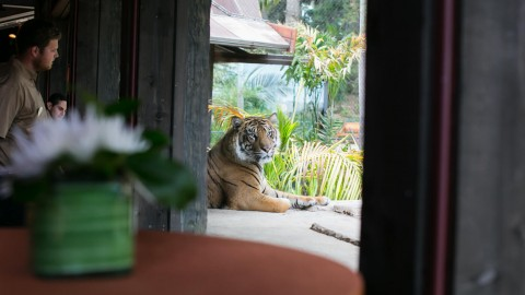 Innovative Meetings and Events at the San Diego Zoo